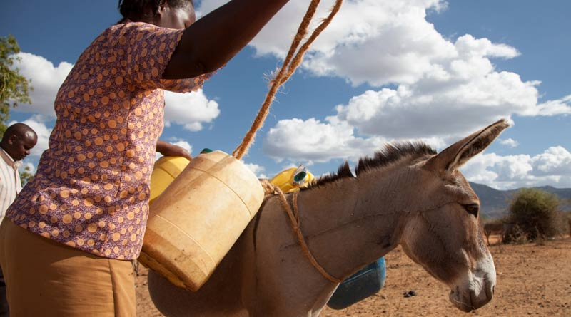 A donkey owner loads water containers.