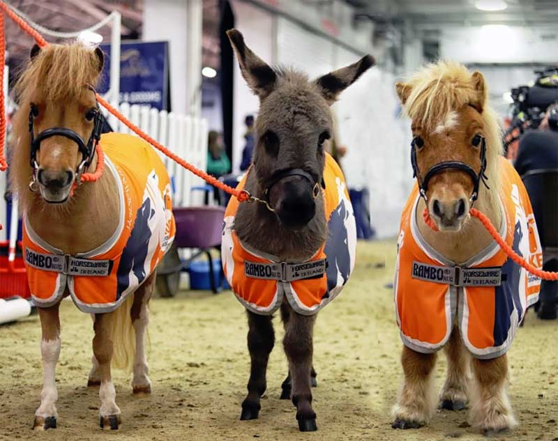 Brooke mascots Alfie the Dinky Donkey and mini-Shetland ponies Harry, right, and La La were a huge draw for the thousands of attendees at Olympia.