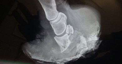 Latest laminitis research collated for vets, horse owners
