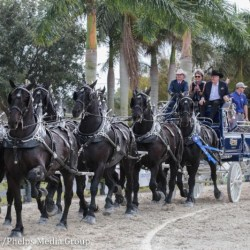 Express Ranches Percherons. © Emma Miller / Phelps Media Group