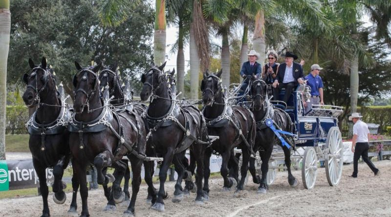 Express Ranches Percherons