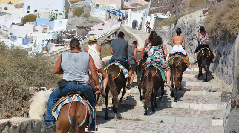 Donkeys and mules carry tourists, luggage, and other items, and are often overloaded.