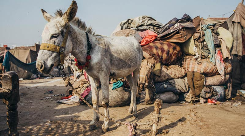 Waste collection was the primary source of income for 89% of donkey owners interviewed.