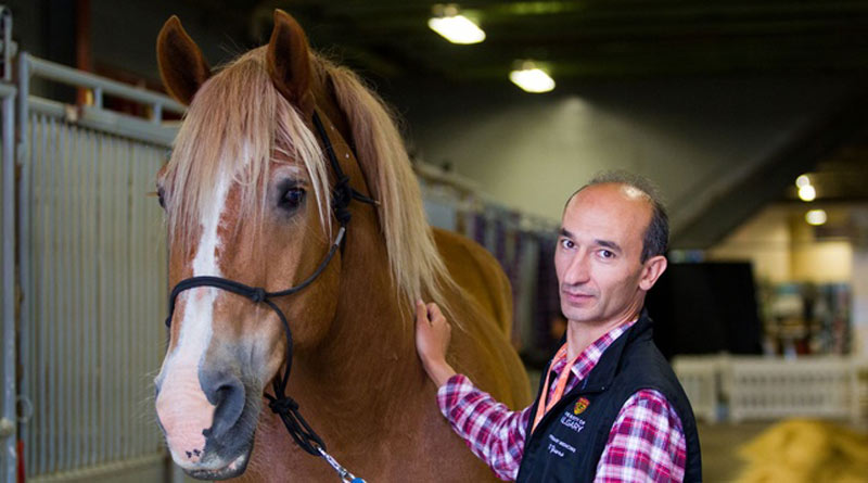 Renaud Léguillette completed a clinical trial of a method of examining a horse's gut called capsule endoscopy.