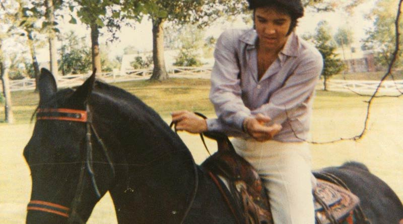 Elvis Presley riding one of his Tennessee Walking Horses at Graceland.