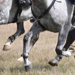 Medication breach sees Endurance rider suspended and fined