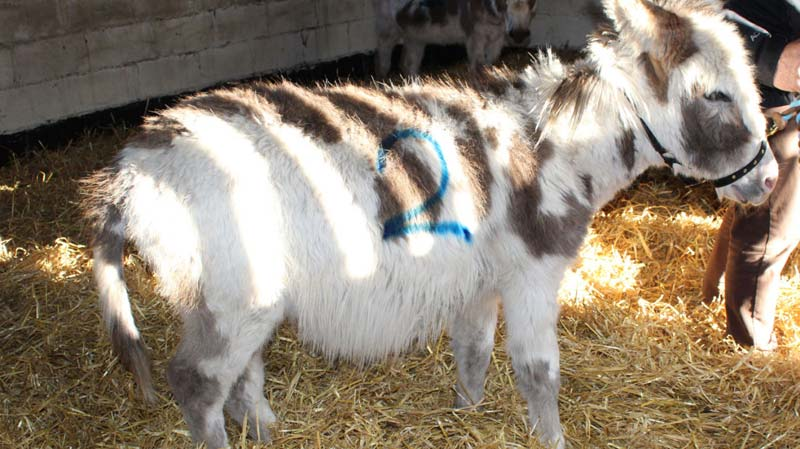 """Donkey welfare advisor Charly Wain amongst Toby Charities unite to rescue fourteen donkeys from """"dreadful"""" conditions"""