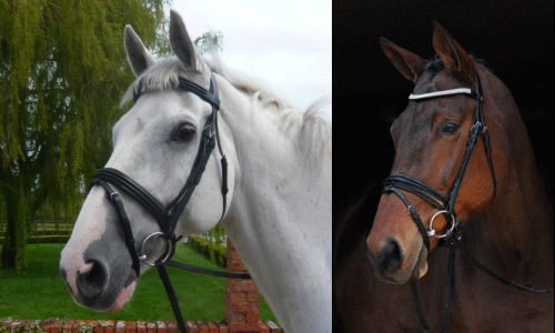Here are unopen to of the most pop bridle types available On the nose: Which bridle is best for your horse?