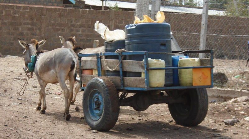 Donkeys may be of direct or indirect use in production and commercial activities. Specifically, they contribute to agricultural production and food security by transporting water and fodder for other livestock, firewood and other daily needs to the homestead and agricultural products to the market.