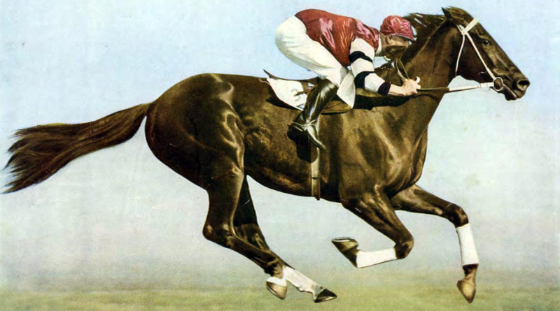 An image of Phar Lap graces the cover of the Abacus Auctions programme.