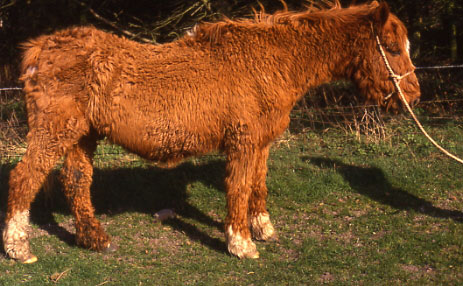Cushing's disease in horses commonly causes excessive hair growth, muscle wasting along the top line, and abnormal fat distribution.