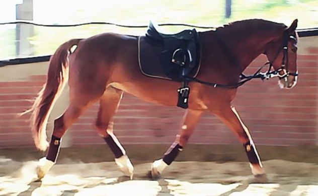 Dressage horses opt for lower rein tensions than those used