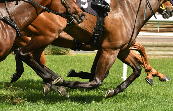 Debate is polarised roughly the continuation of jumps racing Punters: Underestimate woman individual jumps jockeys at your endangerment – research