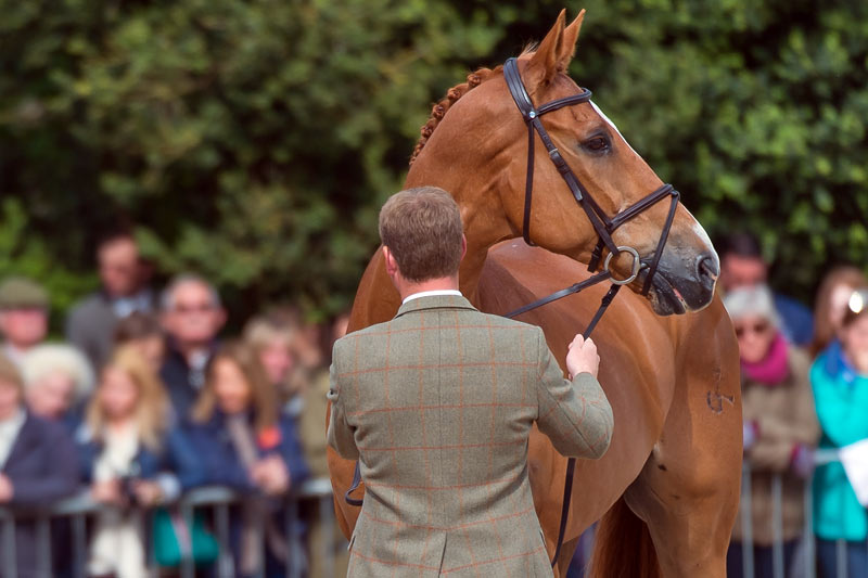 Oliver Townend and Armada at the trot-up at Burghley.