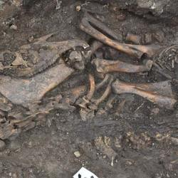 The skeletons of a horse and a dog have been unearthed in a Viking boat burial in Sweden. © The Archaeologists/© The Archaeologists/Arkeologerna Statens Historiska Museer