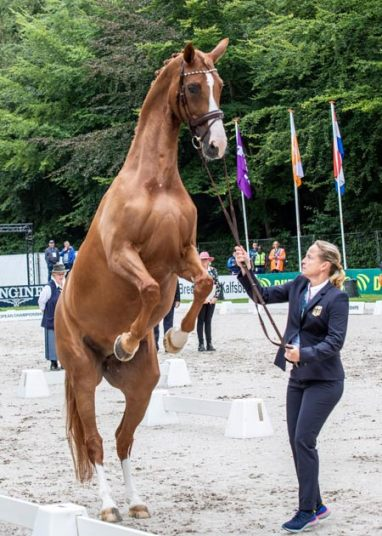 Bella Rose at the Dressage inspection at the Longines FEI European Championships 2019 in Rotterdam (NED).