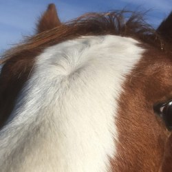 Hand-held equine blood testing device gives speedy results