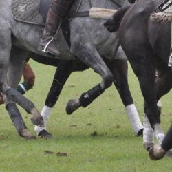 Bisphosphonate use in horses: Scientists call for more research