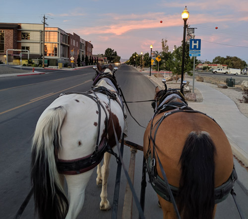 Renegade and Star-Buck heading out of Winnemucca, Nevada, in August.