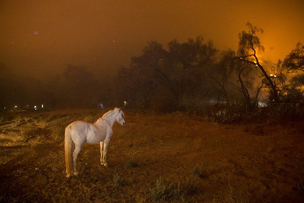 A horse watches the fires as fire crews work to build a breakline from the encroaching flames in Ojai, California, in December 2017.