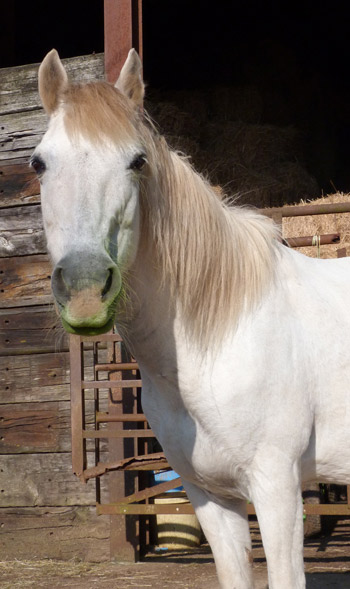 At 38, Topsy is the oldest resident at People4Ponies.