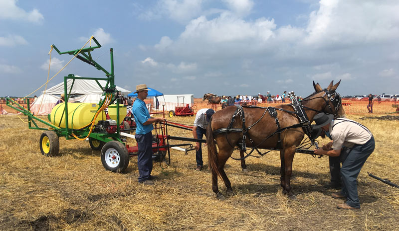 A pair of mules with full Amish harness, during a demonstration of equipment at the Horse Progress Days. The animals are hitched to a forecart and a crop sprayer, using an auxiliary engine for the pump.