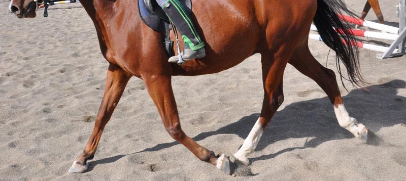 Inertial sensors on horses put to the test in asymmetry study - Horsetalk.co.nz