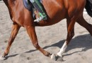 Top conditioning tips from equine biomechanics expert