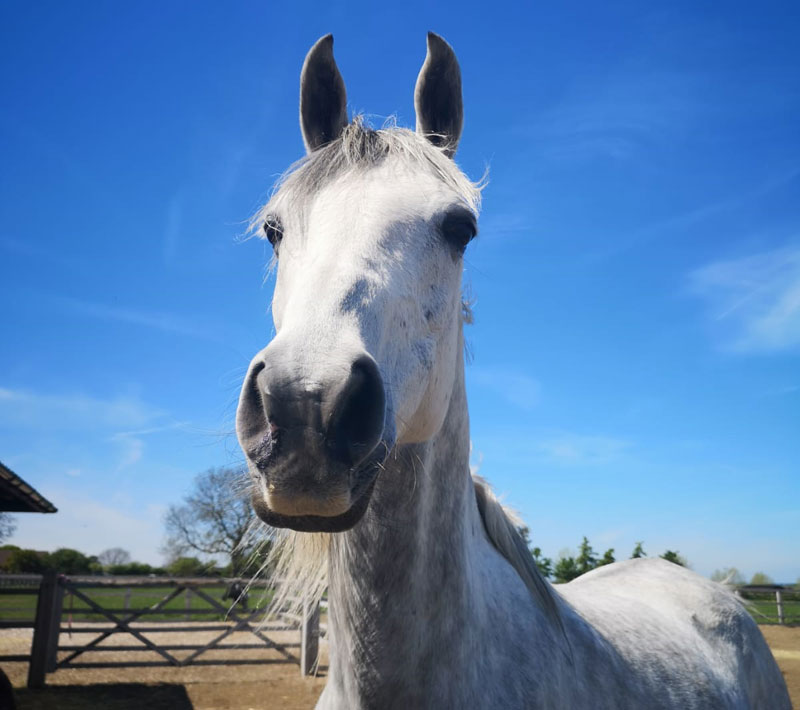 Nile is back at Blue Cross animal rehoming centre in Rolleston after being out on loan, and is looking for a new home.