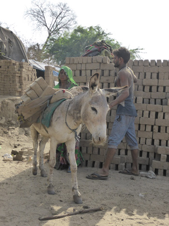 """Researchers say a more holistic """"one welfare"""" approach is needed to working horses and donkeys in India."""