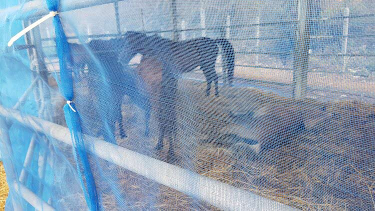 Horses are placed behind effective netting and microchipped so that they can be easily identified later for vaccination
