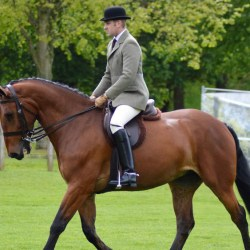 Wyevale Harry, ridden by Matthew Powers, won Virtual Windsor 2020's Cleveland Bay class for the Queen. © Royal Windsor Horse Show