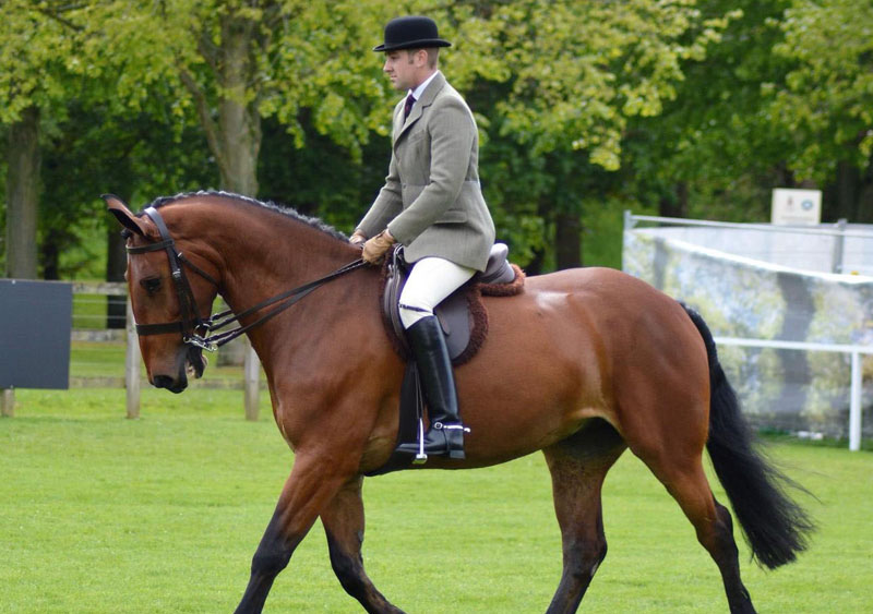 Wyevale Harry, ridden by Matthew Powers, won Virtual Windsor 2020's Cleveland Bay class for the Queen.