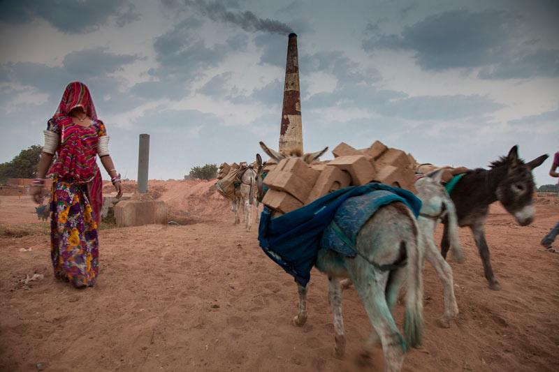 Donkeys at work at a brick kiln in India.