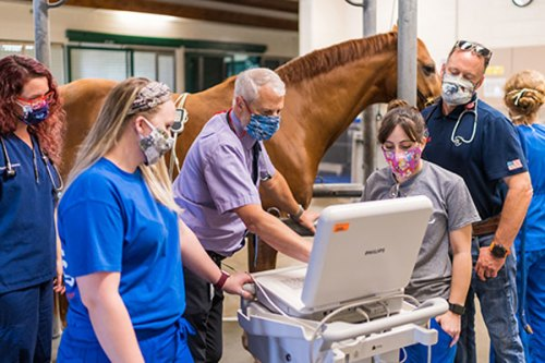 A team of veterinarians and technicians at UF's Large Animal Hospital view the findings of an echocardiogram in progress on Capone, a 12-year-old warmblood. © Jesse Jones