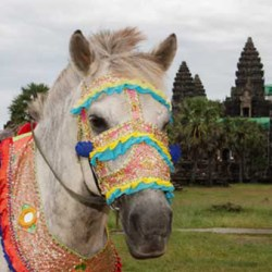 A pony decorated for a festival in Cambodia. Working ponies are widely used by communities in rural regions for transporting people, water and goods. © World Horse Welfare