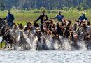 Chincoteague pony swim cancelled, but auction goes online