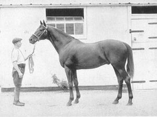 Dark Ronald was not the origin of Warmblood fragile foal syndrome, tests on his preserved hide have shown.