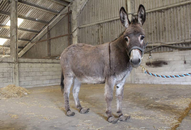 Jelly's owners could not cope with her behaviour, leading to her feet becoming overgrown.