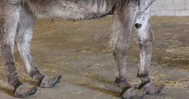 Equine charity urges owners to seek help over welfare concerns