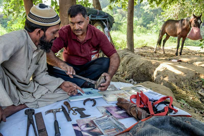 Brooke farrier Rakesh Kumar, right, is mentoring Indian farrier Mohammad Syeed. Mohammad has been a farrier for 20 years, and is pleased to have further training in the art.