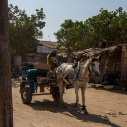 A working horse in Senegal. © World Horse Welfare
