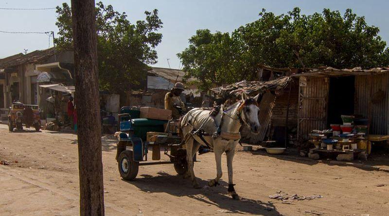 A working horse in Senegal.