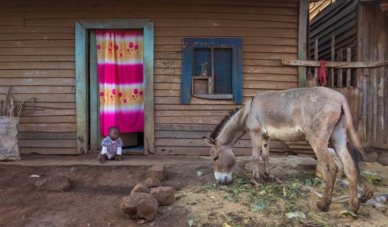 One of the school children of the Mathangaura primary school, Wanguru, Kenya, with his donkey.