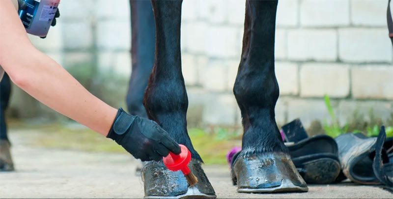 Mobile app ShowAssist connects equestrians with support staff at horse shows.