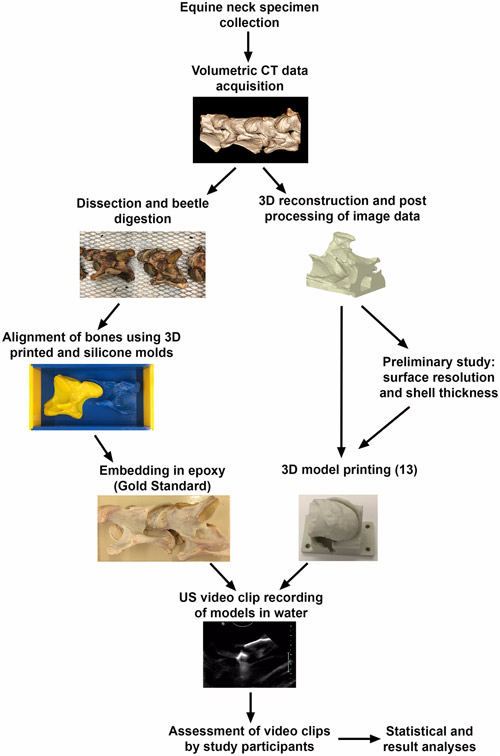 Summary of the materials and methods for the ultrasonographic evaluation of 3D printed models.
