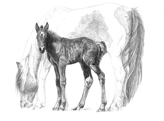 "An original pen and ink drawing of World Horse Welfare's famous foal 'Captain Tom' is among the prizes in the charity's ""Ride of your Life"" competition."