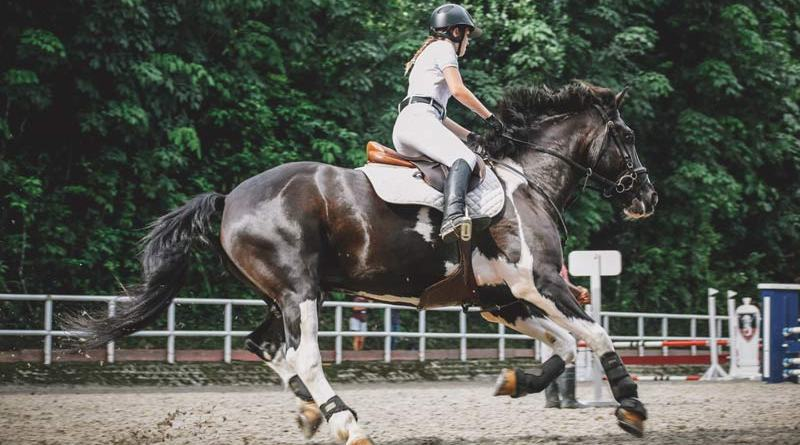 The webinar Recognising Behavioural Signs of Discomfort will focus on the Ridden Horse Pain Ethogram developed by Dyson, which aims to help riders identify signs of pain before it is too late to treat.
