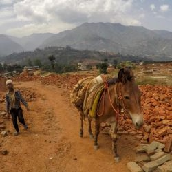 A working mule in the brick kiln industry of India. When animals and livestock have been part of disaster planning, communities are able to recover and rebuild their lives more quickly, equine charities say. © The Donkey Sanctuary