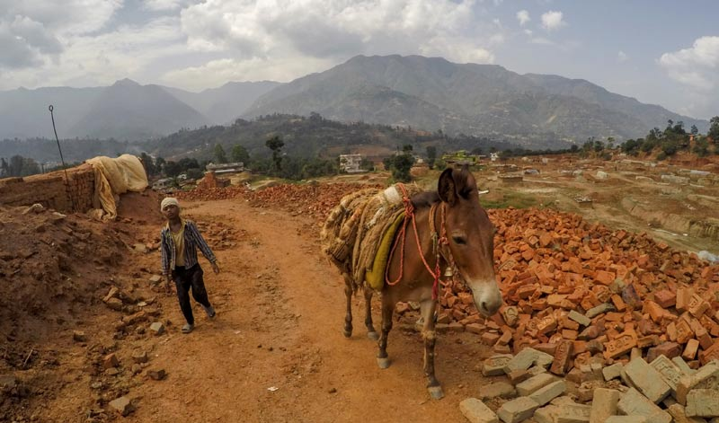 A working mule in the brick kiln industry of India. When animals and livestock have been part of disaster planning, communities are able to recover and rebuild their lives more quickly, equine charities say.